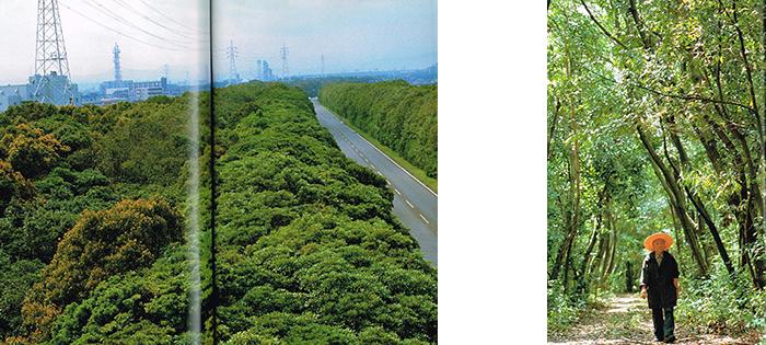 新日鉄の森
