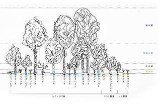 理想的な樹林2s