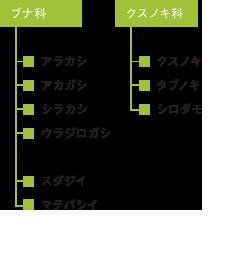 9の常緑広葉樹