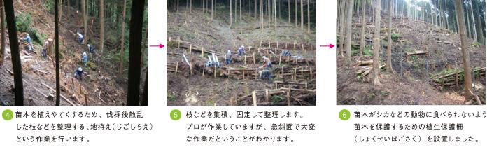 成長の森foto2