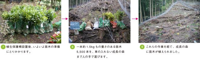 成長の森foto3