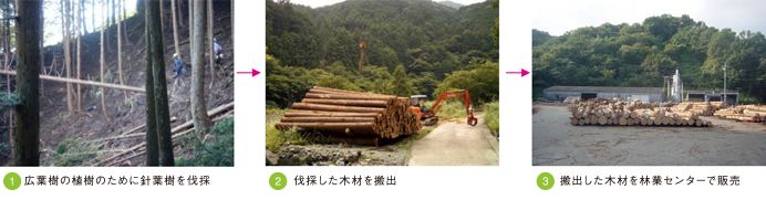 成長の森foto1