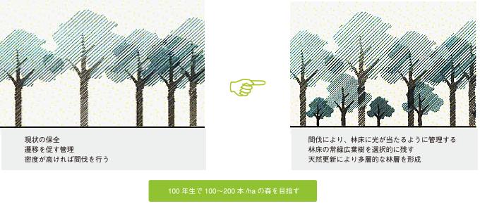 照葉樹林の例